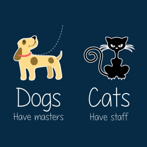 Dog vs Cats