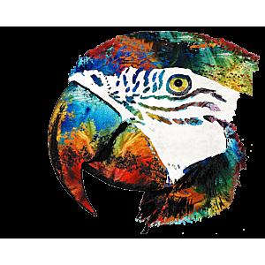 Macaw Parrot Portrait